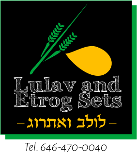 lulav and etrog sets buy on sale for sukkot